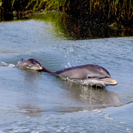 Flipper Finders Boat & Sea Kayak Tour Co. : Baby Dolphin!!!