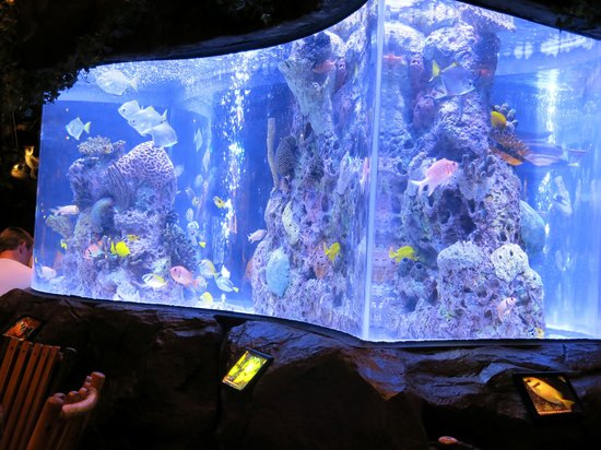 Big fish tank at the rainforest cafe picture of rain for Big fish casino reviews
