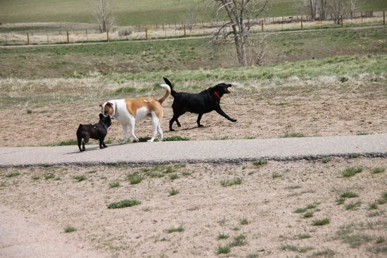 Chatfield State Park: Woohoo! The chase is on!