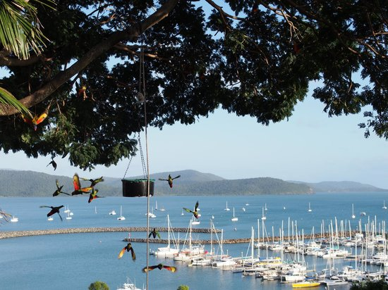 Whitsunday Moorings Bed and Breakfast: Birds feeding in the mornings during breakfast