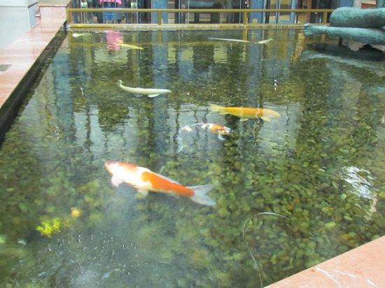 Michelangelo Hotel: Lindas carpas num lago artificial sempre limpo, relaxante.