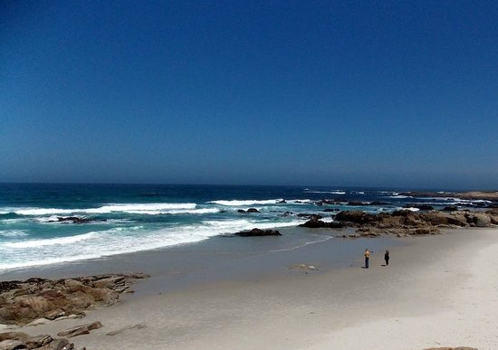 Monterey Bay: nice beach by Coast Guard Pier