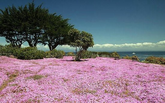 Monterey Bay: beautiful spring flowers