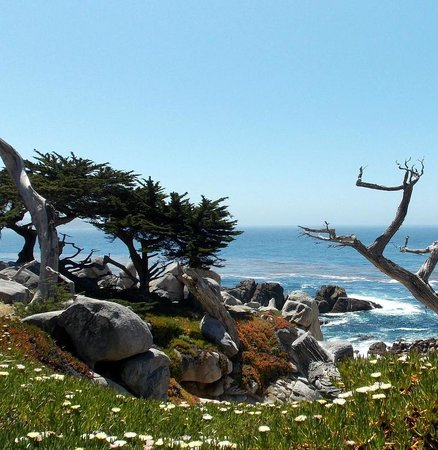 Monterey Bay: Great views from the parks