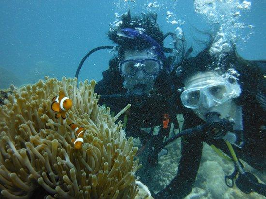 You Should See These Flatworms Swim Picture Of Blue Dive Port Douglas Port Douglas Tripadvisor