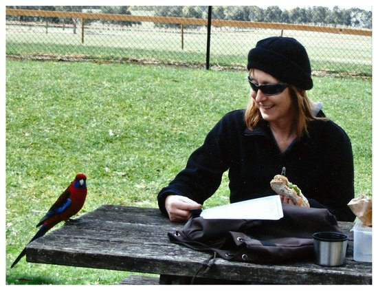 Hanging Rock Reserve: Rosella joined the picnic