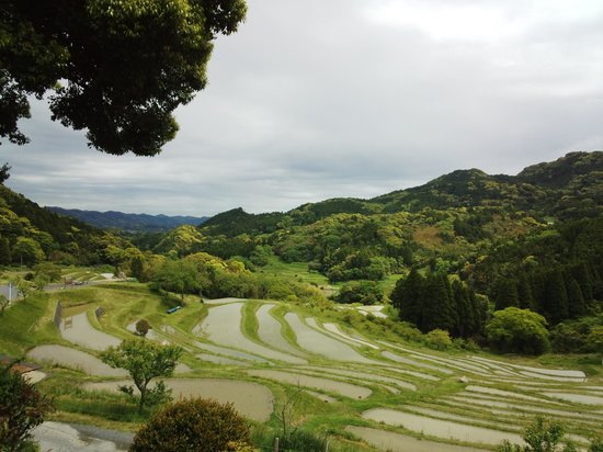 Oyama Rice Terraces: 鴨川千枚田