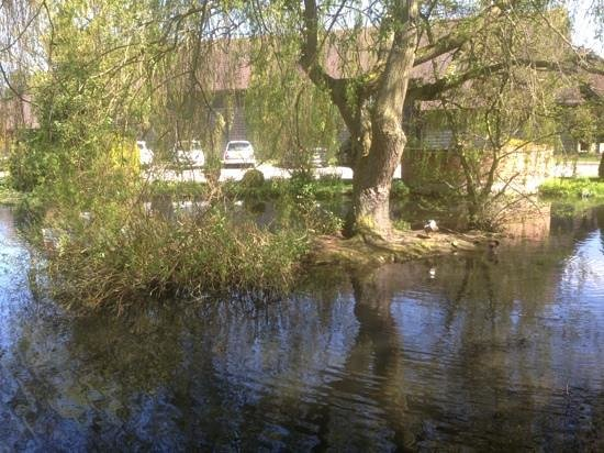 Moor Mill Beefeater: pond