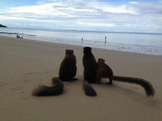 Le Jardin Maore : beach