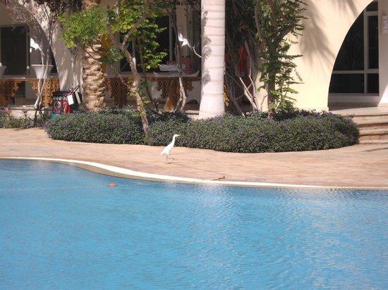 Tirana Dahab Resort: un simpatico visitatore