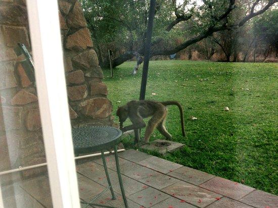 Ilala Lodge : giardino di fronte alla stanza dove scorrazzano animali
