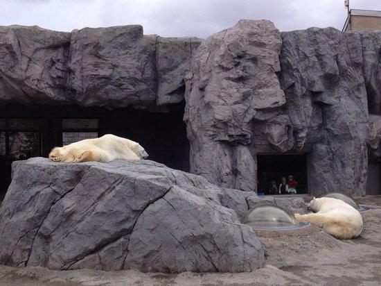 ペンギンのお散歩 - Picture of Asahiyama Zoo, Asahikawa - TripAdvisor