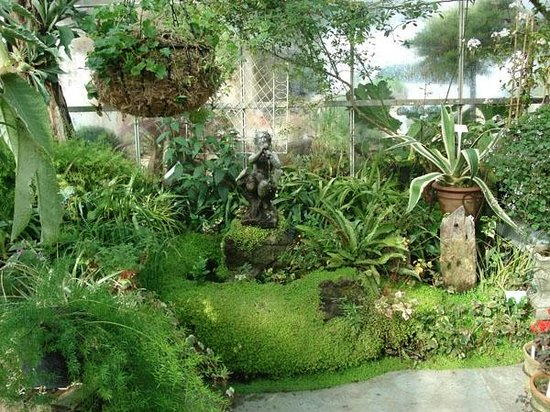 Ribchester, UK: The Frog pond in the Glass House