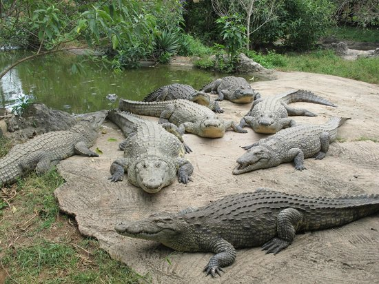 Livingstone Reptile Park: A lazy day in the sun at the Gwembe Croc Park