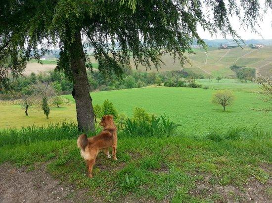 B&B Bricco del Gallo: il paesaggio intorno