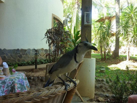 Hotel Mamiri: Birds in the hotel
