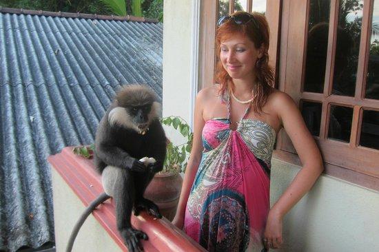 Mini-Hotel VillaWatuna: Кормим обезьянок с балкона