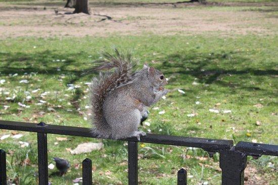 Battery Park: Eekhoorntjes eten uit je hand