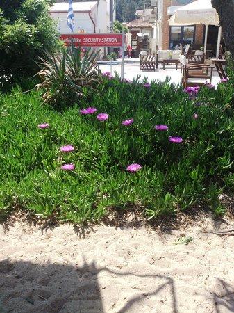 Hotel Queen Olga : Beach 1 hour away