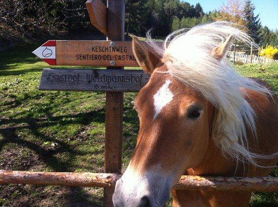 Saderhof : Il Cavallo