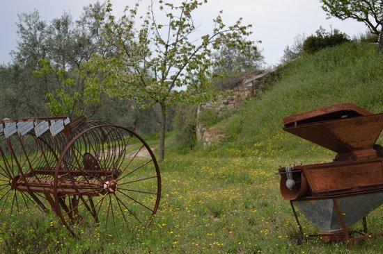 Azienda Agraria Miscianello : nel parco