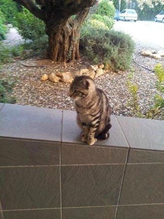 Tryp Valencia Almussafes Hotel: Gato Mascota