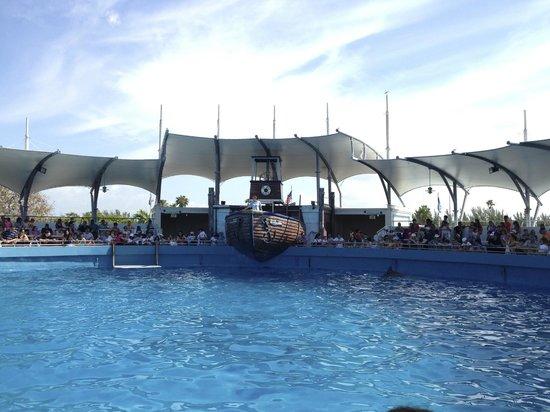 Miami Seaquarium: Top Deck Dolphin