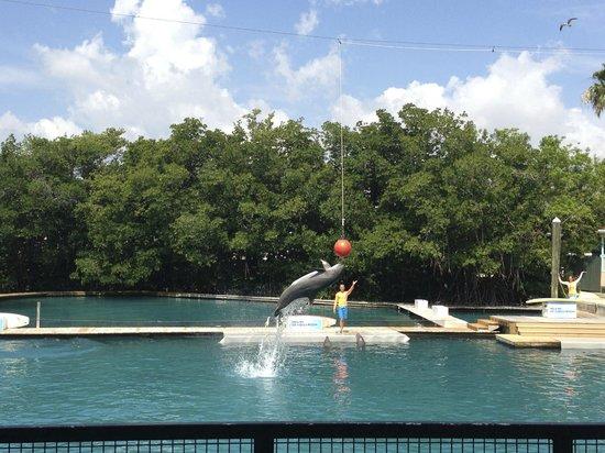 Miami Seaquarium: Flipper Dolphin