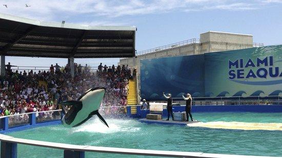 Miami Seaquarium: Killer Whale and Dolphin