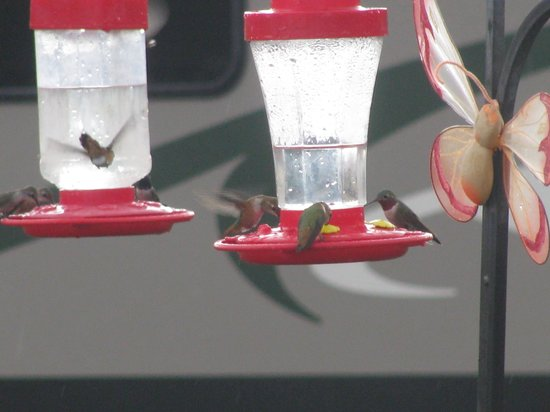 Elk Meadows River Resort: always a joy watching the hummingbirds