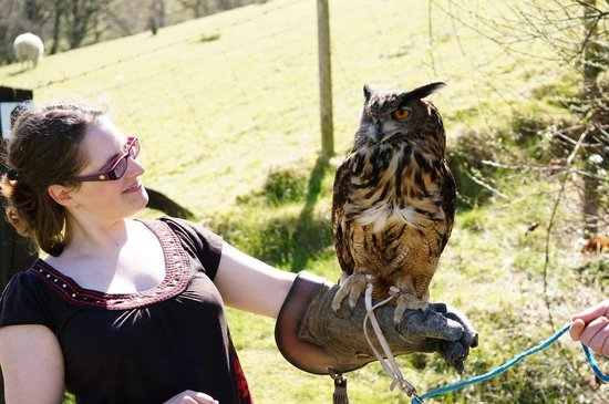 Falconry Experience Wales: Handling an Owl