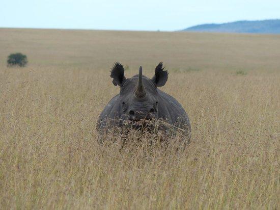 Tipilikwani Mara Camp - Masai Mara: Black Rhino