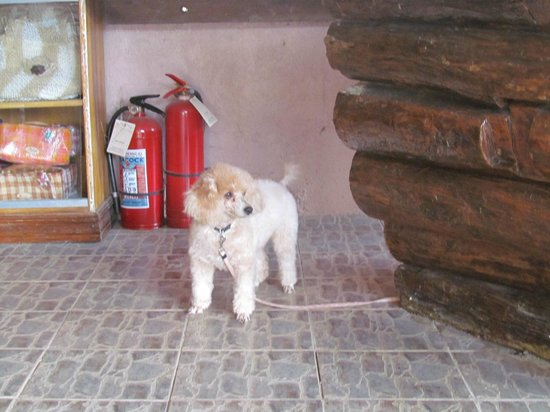 Balay Inato Pension: owner's dog