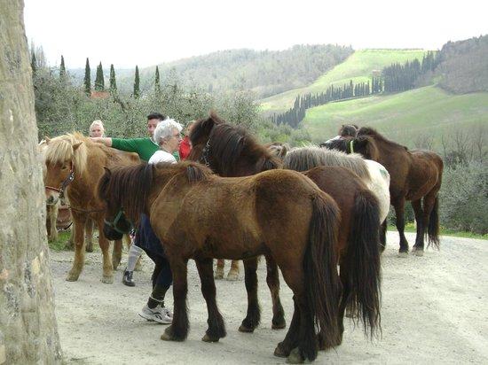 Fattoria Voltrona: horses
