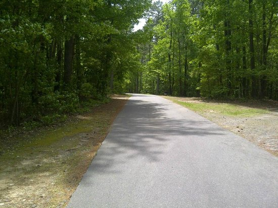 Jordan Lake State Recreation Area: View up the road from site B022