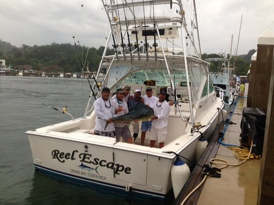 Drake Bay, Kosta Rika: Dorado caught in Offshore World Championships