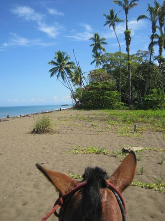 Jinetes de Osa Hotel: Riding on the pristine beach