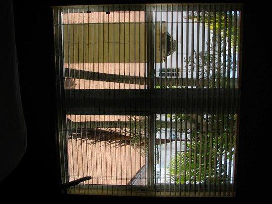 La Flora: view from window