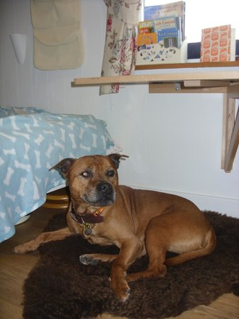 The Shepherd's House Bed & Breakfast: Dog friendly