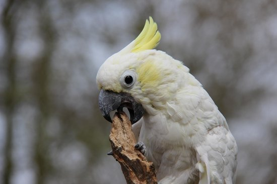 Tropical Birdland: A real character
