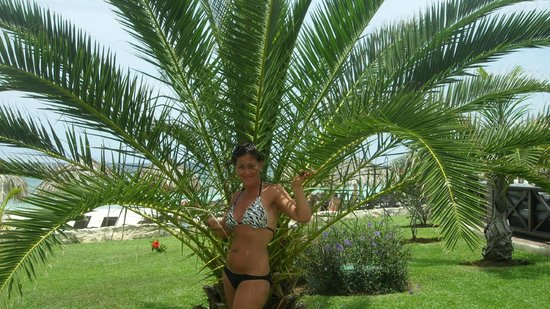 Secrets Wild Orchid Montego Bay: love the palm trees