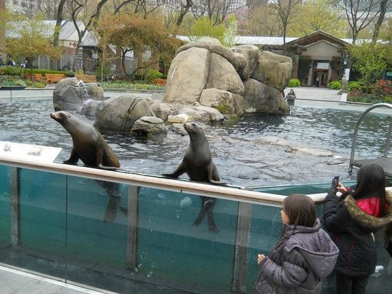 Central Park Zoo: seals