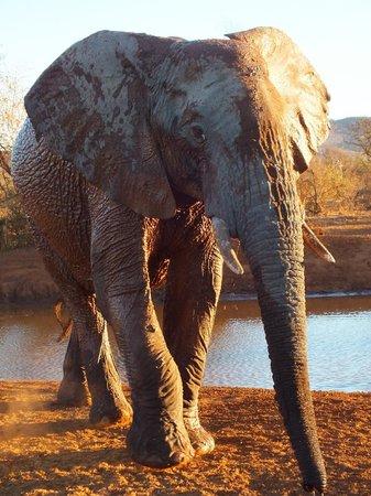 Madikwe Safari Lodge: Game drive