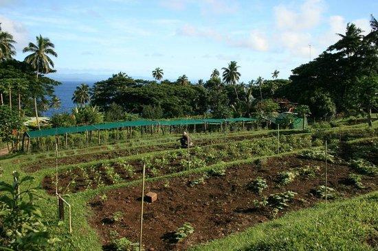 Nakia Resort & Dive : Resort vegetable garden