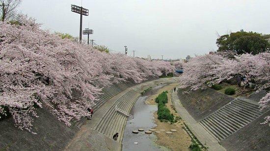 Nagoya, Japan: Yamazaki River