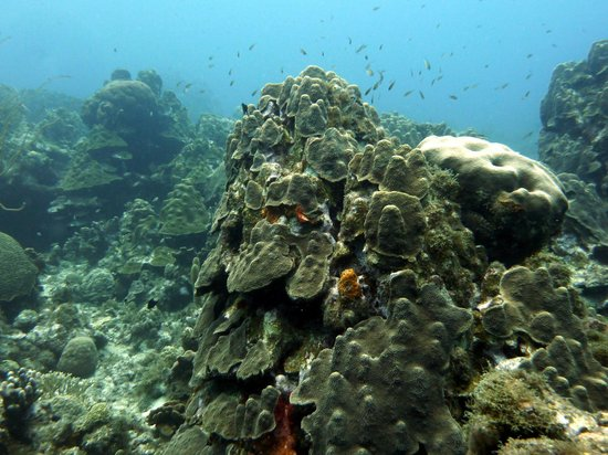 Want 2 Dive: Mushroom Forest