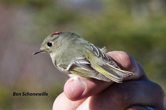 McIntyre Creek: Many kinds of birds fly through