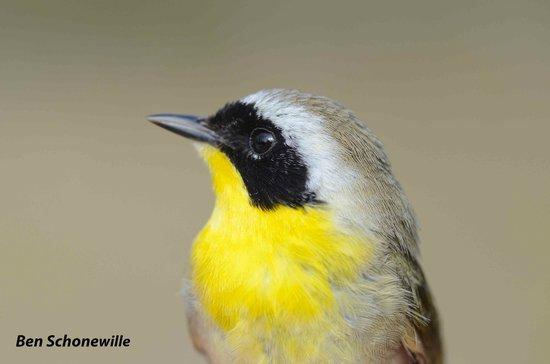 McIntyre Creek: This is a beautiful bird