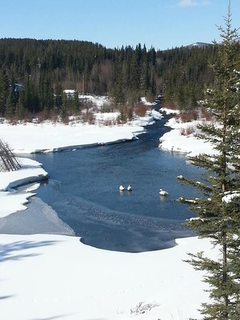 McIntyre Creek