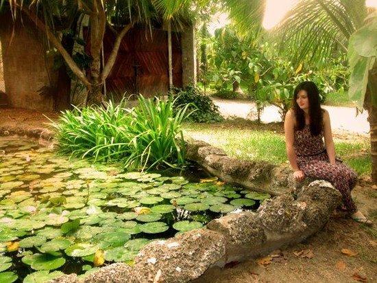 Saiananda: Lotus flowers